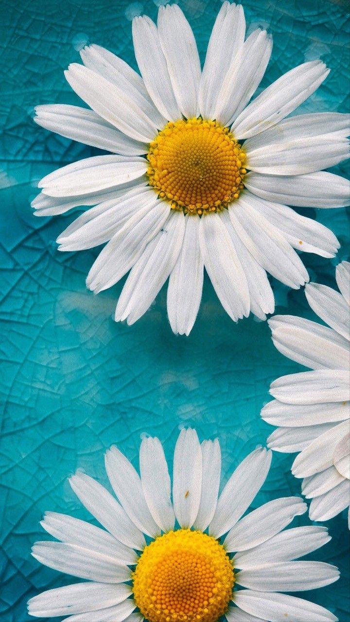 Idea By Marie Mcclain Renard On Daisy Flower Iphone Wallpaper