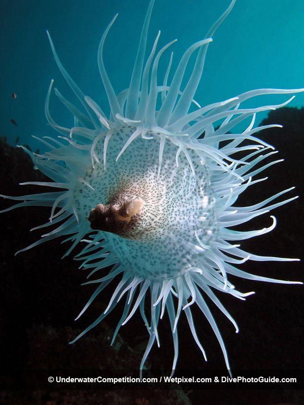 DEEP Indonesia International Underwater