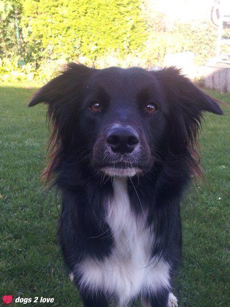 Nala / Border Collie Hunde, Hunde fotos, Ich liebe hunde
