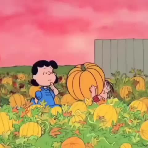When you find the perfect pumpkin... #Halloween