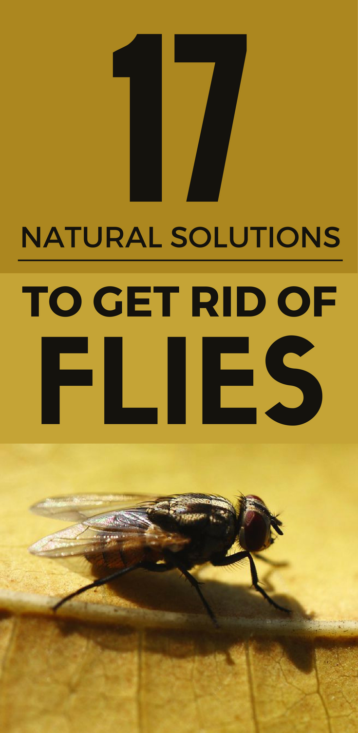 natural solutions to get rid of flies mycleaningsolutions