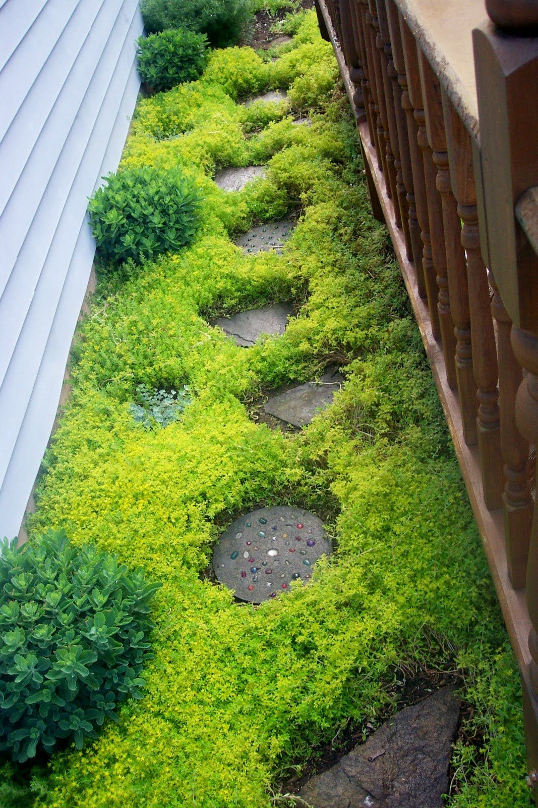 Stepables Perfect Plants For Paths And Walkways Sowing Seeds