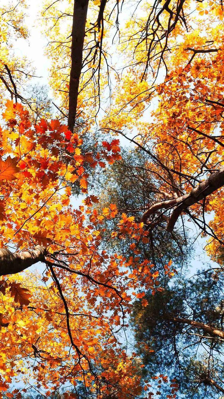høst autumnwallpaper høst Fall wallpaper, Iphone