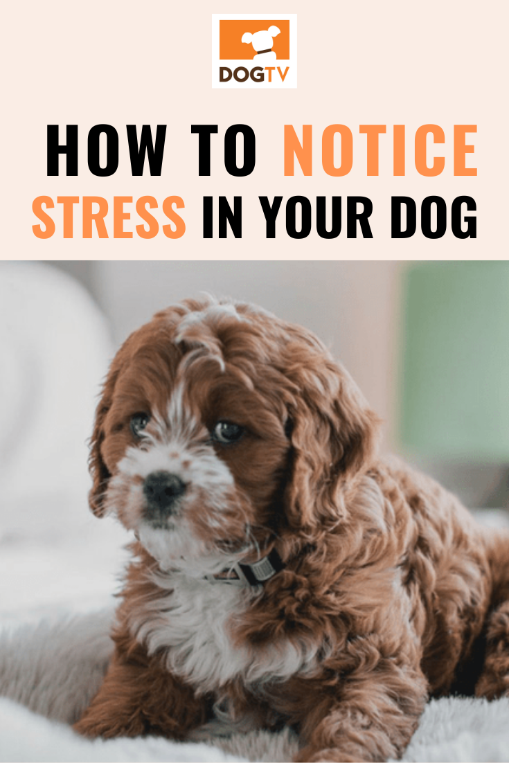 How To Notice Signs Of Stress In Your Dogs Your Dog Dogs Pets For Sale