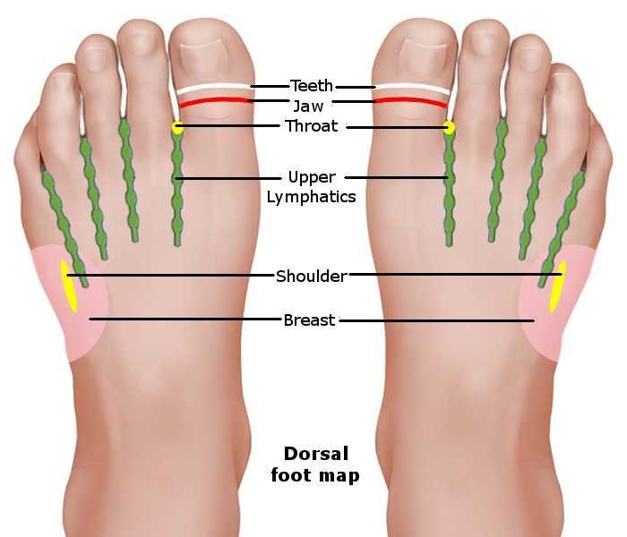 Reflexology Foot Chart Dorsal Map Acupressure Revealed