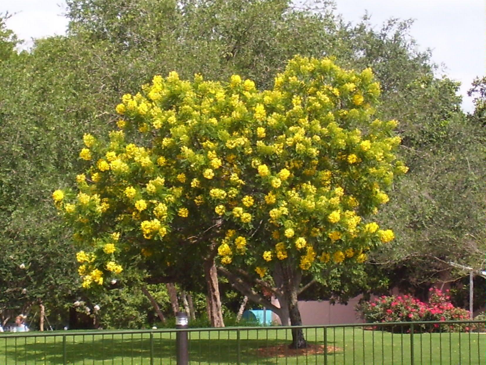 Gold Medallion Tree | Beautiful _Tree :) | Pinterest