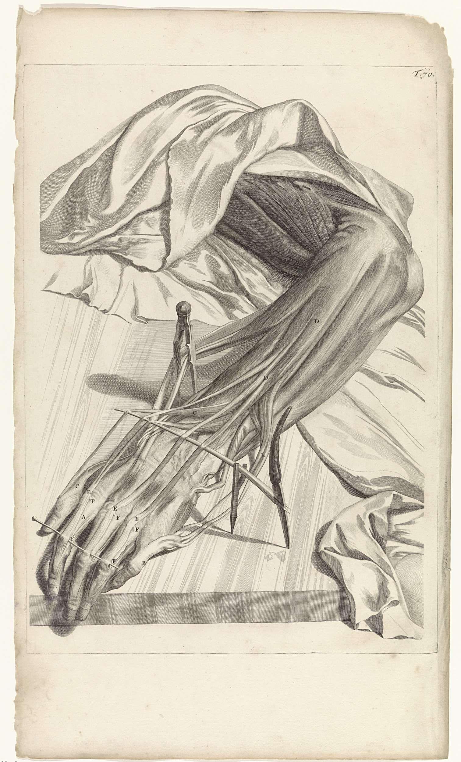 Anatomische studie van de spieren en pezen van de linkerhand, Pieter ...