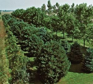 5 tips for planting a windbreak living the country life for Garden windbreak designs