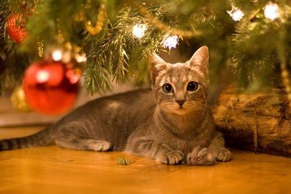 Trees Cats Animals Balls Christmas Christmas Trees Domestic Cat