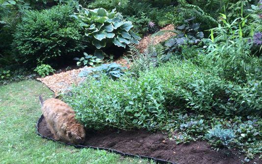 Photo of Step-by-Step DIY Garden Path | Gardener's Supply