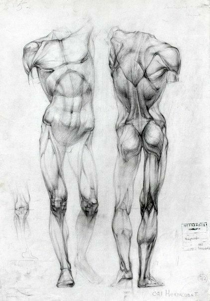 Pin de Pato tena en How to draw   Pinterest   Anatomía, Anatomía ...