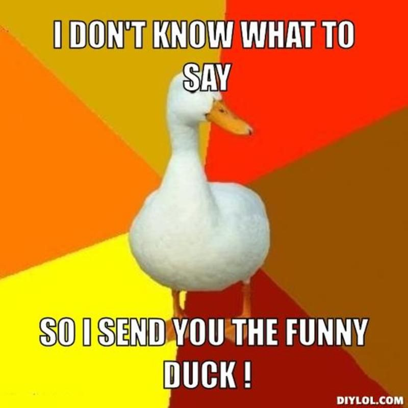 3174b8a30e441d8951a9bfff0d009f2c resized_tech impaired duck meme generator i don t know what to say