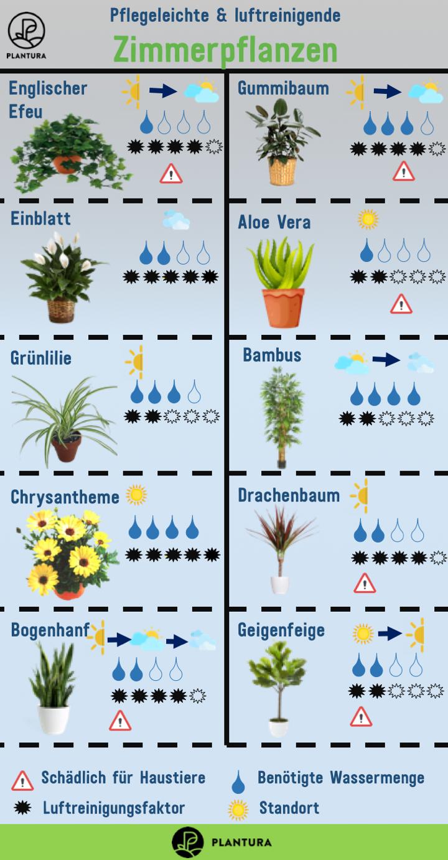 Luftreinigende Pflanzen Die Top 10 D I Y Garden Plants Garden