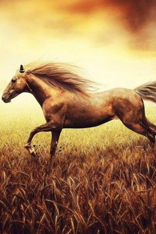Flying Horse Hd Best Android Wallpaper Best Android Themes And Background Android Park Horses Animals Beautiful Horses Brown horse wallpaper hd