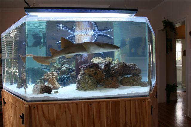 shark tank TANKS A LOT. Pinterest Shark tank, Shark