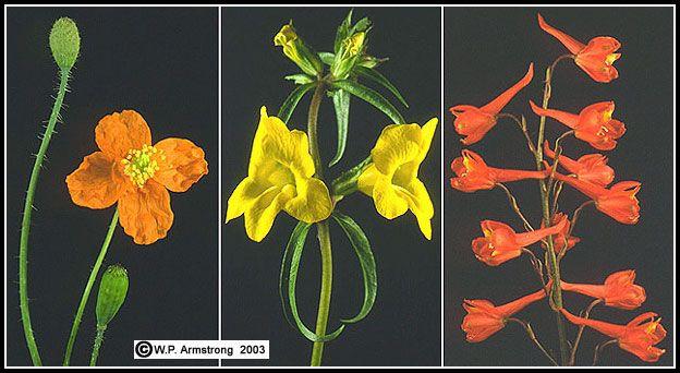 Flowers That Grow After Forest Fires Fire Flower Wild Flowers Nature Art