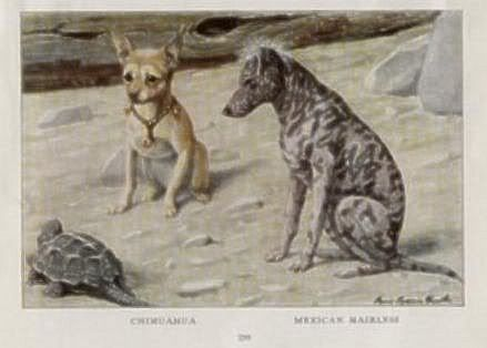 Historic Pics Of Your Breed Mexican Hairless Dog Hairless Dog