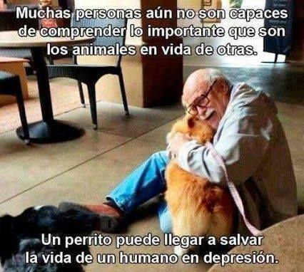Los Animales Y Su Carino Perros Amor Perruno Animales Bonitos