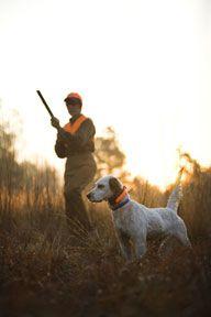 Teach Puppies To Retrieve Birds And Become Future Bird Dog Hunters