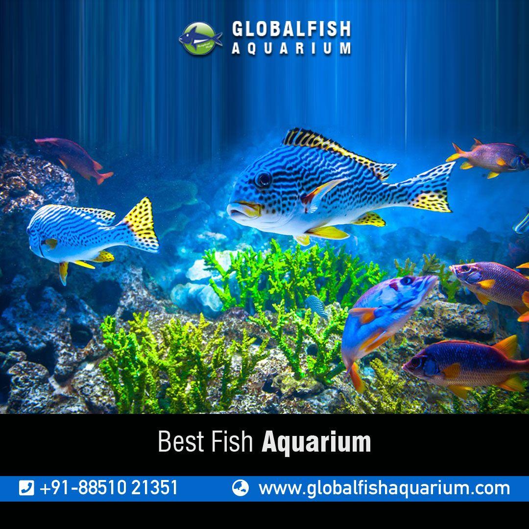 Fish Aquarium For Order Customer Contact Us At 91 8851021351 Or Mail Us Your Query At Globalfishaquariums Gmail Com Read Aquarium Fish Fish Pet Fish