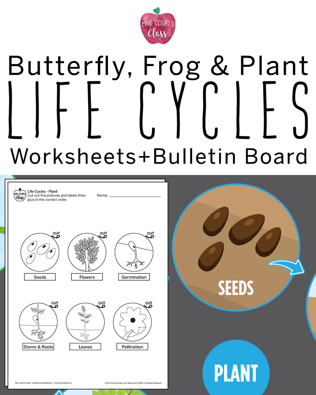 Life Cycles Butterfly Frog Amp Plant Bulletin Board Set