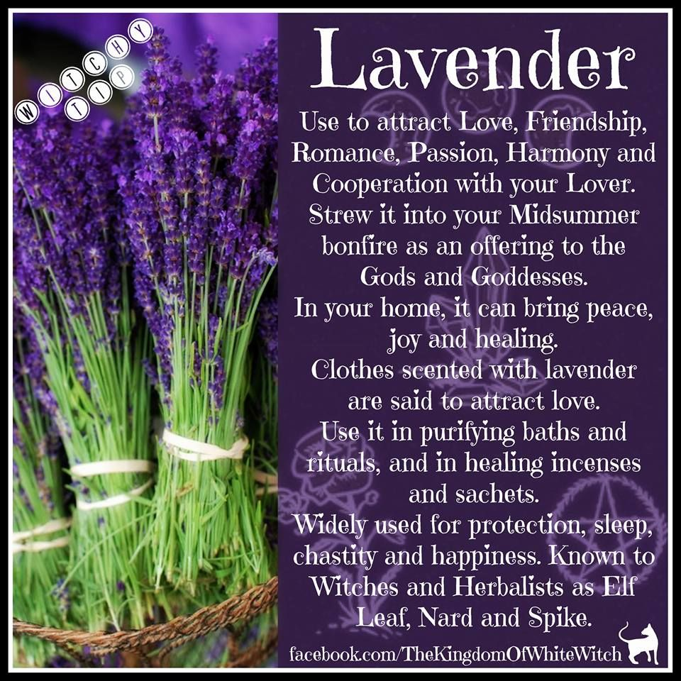 Magical Uses For Lavender Witch Herbs Magic Herbs Magickal Herbs