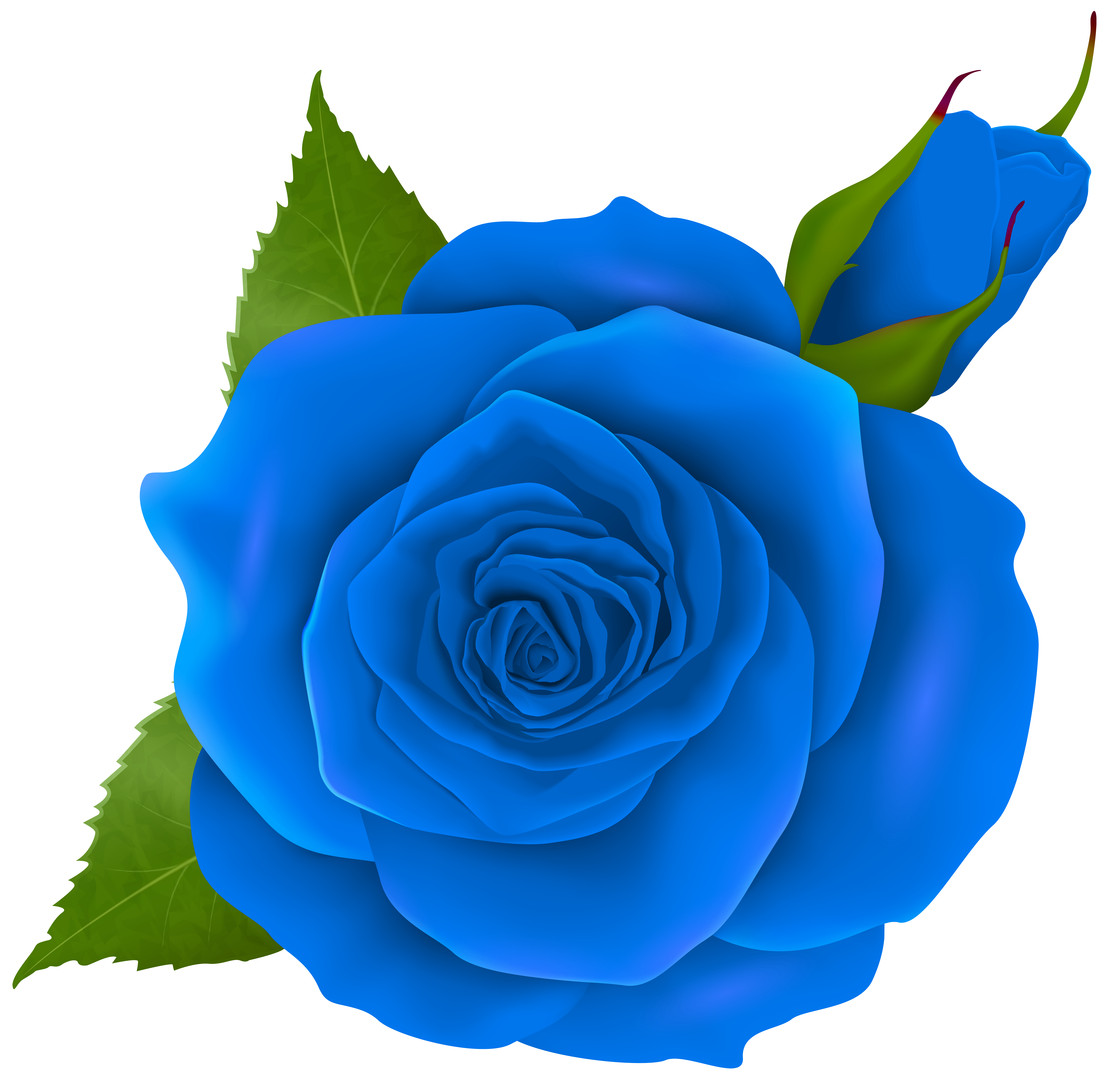Blue Rose and Bud Transparent PNG Clip Art Gallery