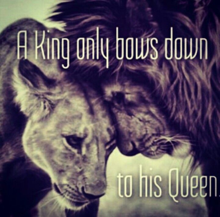 Lion King Love Quotes: King And Queen Lionking Cats Lion