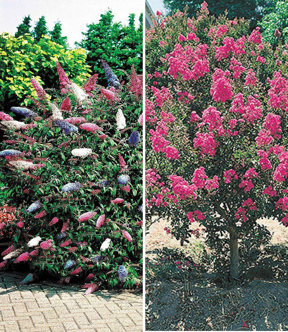 Blüten Sträucher Kollektion2 Pflanzen Gartengestaltung Pinterest