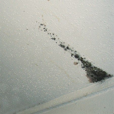 How To Get Rid Of Mould On Your Ceiling The Diy Life Mold In Bathroom Bathroom Mold Remover Mold On Bathroom Ceiling