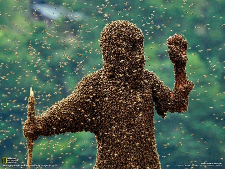 50 pounds of bees on a man
