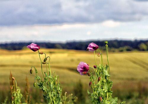 Tips For Better Flower Photography Flower Landscape Amazing Flowers Flowers Photography
