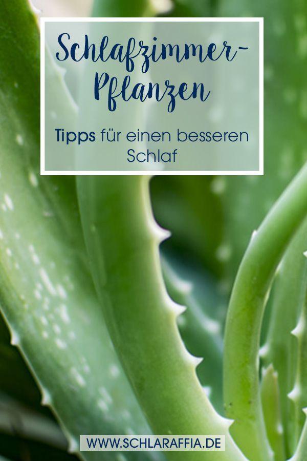 Schlafzimmer- Pflanzen- Tipps für einen besseren Schlaf #pflanzenimschlafzimmer Zimmerpflanzen sind dafür bekannt, gut für das Raumklima zu sein und eine natürliche Atmosphäre zu schaffen. Auch Pflanzen im Schlafzimmer lassen den Raum gleich viel einladender wirken. Wir schauen uns an, welche Pflanzen eure Schlafzimmereinrichtung aufpeppen und welche lieber draußen bleiben sollten. #schlafzimmer #schlafen #greenhome #pflanzen #tipps #tricks #schlaraffia #pflanzenimschlafzimmer