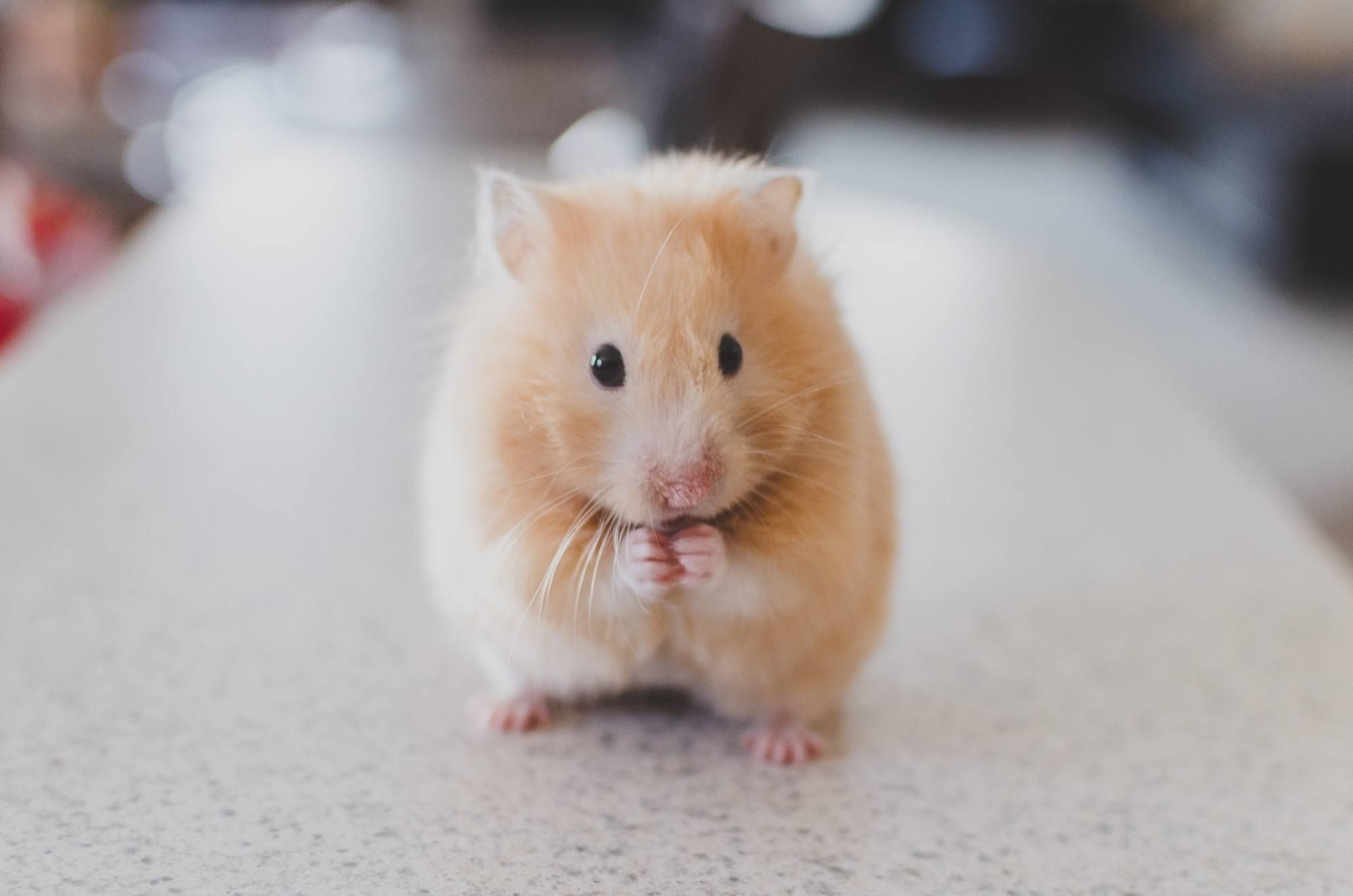 Getting Off the Hamster Wheel (With images) Hamsters as