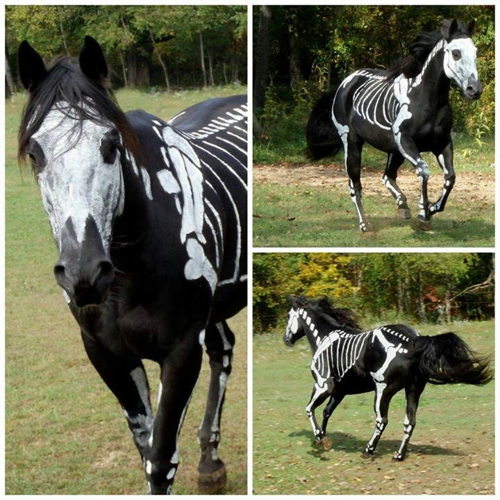 Halloween Häst