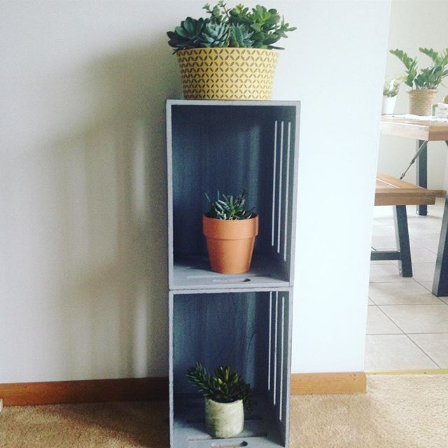 Been just a little obsessed with #succulents these days. ********* @succulents_are_for_sharing #thelakecountrymom #homedecor #livingroom #crates @marshalls @homedepot #home #decor #house #plants #diy #gray #grey #pastels