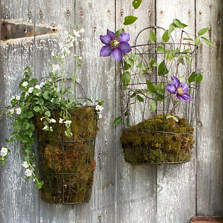 Wire Wall Basket with moss think i can make something like this with wire.
