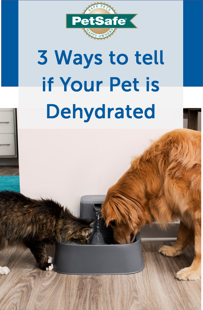 How To Tell If Your Pet Is Dehydrated And How To Fix It Pets Your Pet Dehydrator