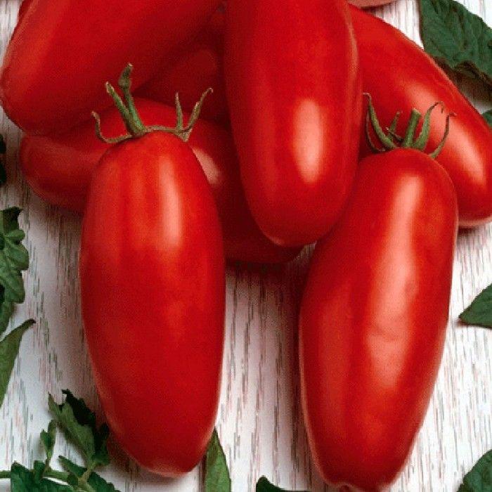 ограничивается томаты названия с фото новички, опытные