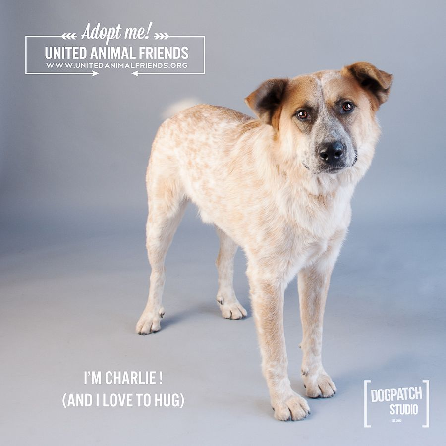 Are You A Volunteer Animal Rescue Photographer Win A New Photo Backdrop Family Pet Portraits Dog Photography Studio Pet Portraits