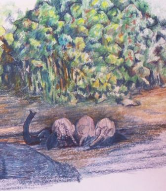 Elephants at the river
