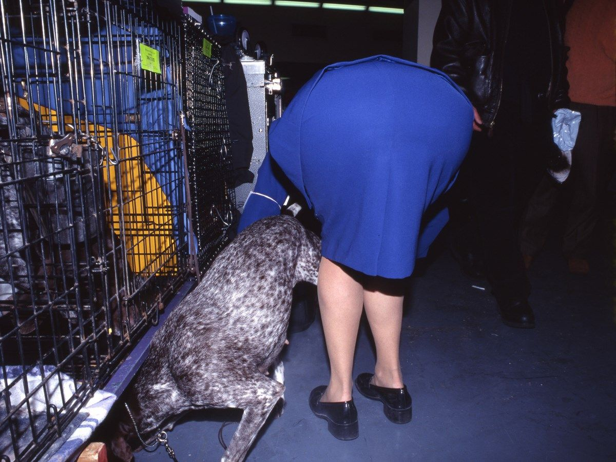 Extraordinary Taken Behind the Scenes at Dog Shows