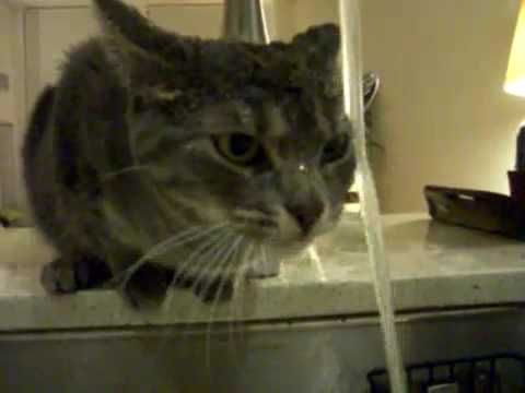 Cat Drinking Water Chatons Droles Chats Et Chatons Chat Bus