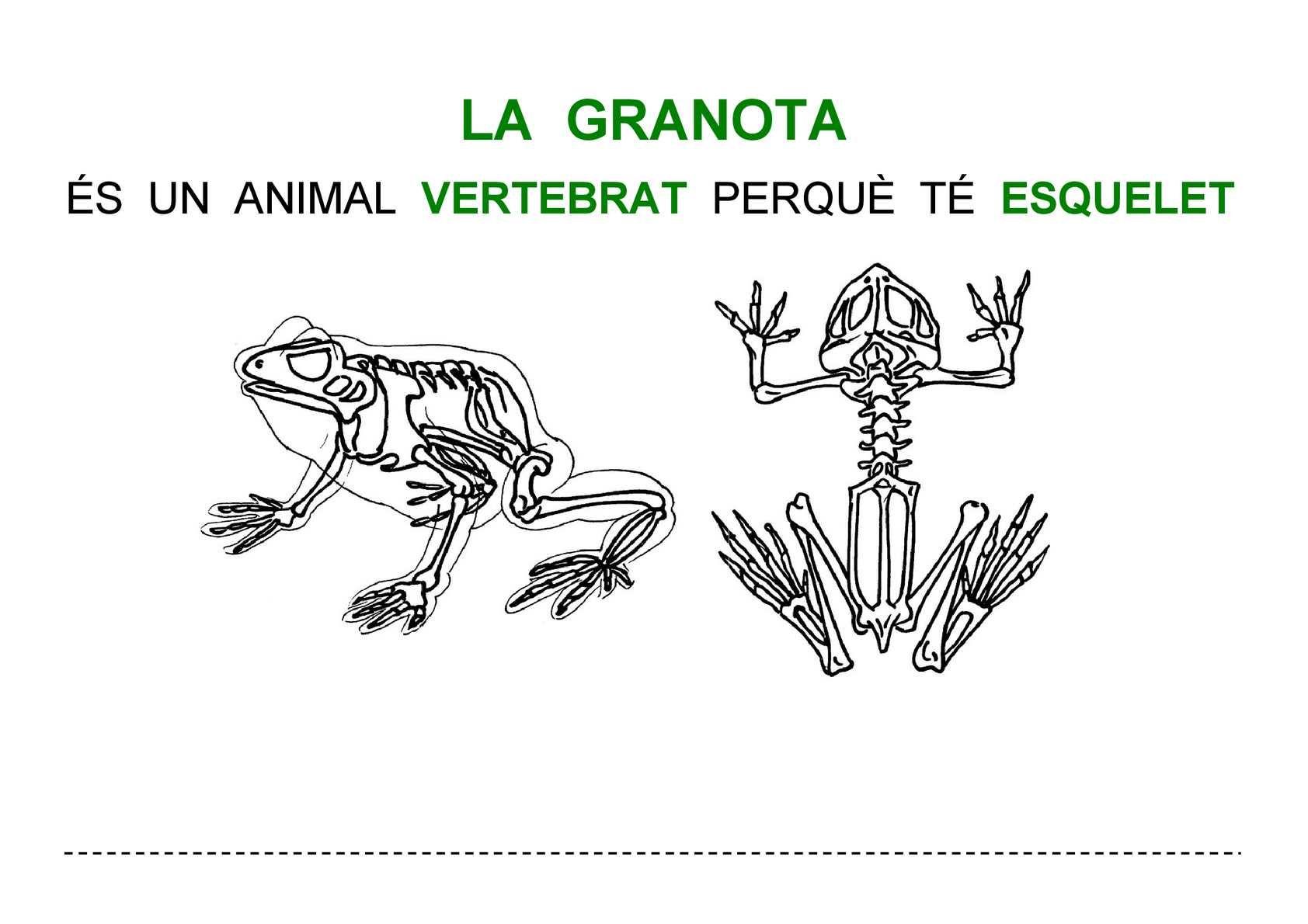 Recortables Anatoma Invertebrados Montessori Zoologa