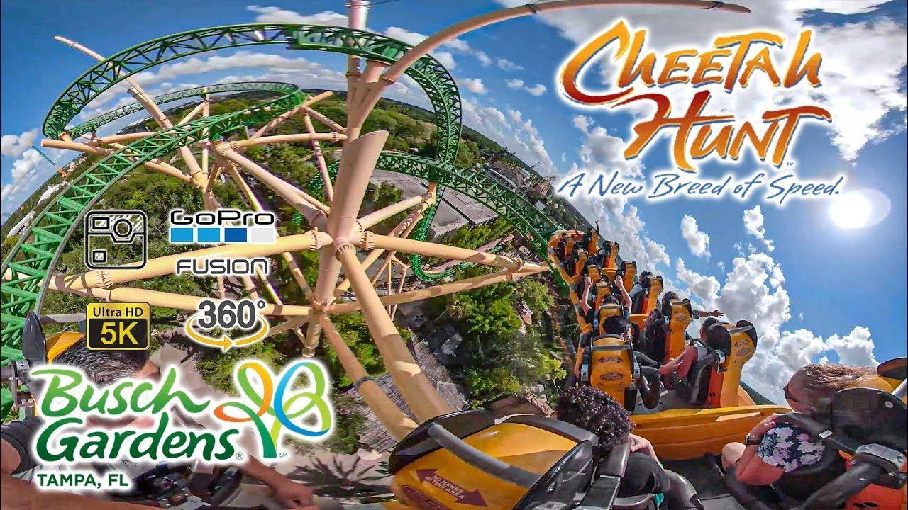 New Roller Coaster Busch Gardens 2019