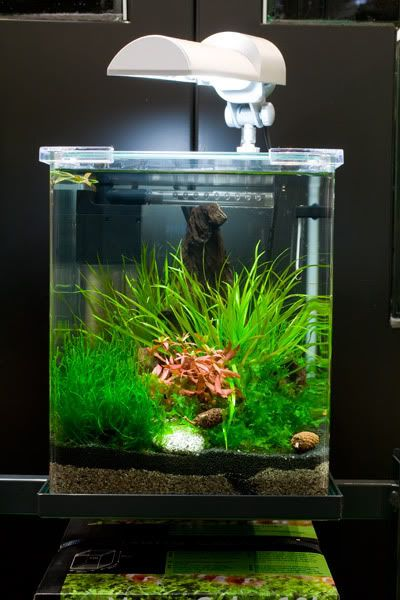 Due To House Move We Are Selling All Our Dennerle Nano Cube Fish Tank.