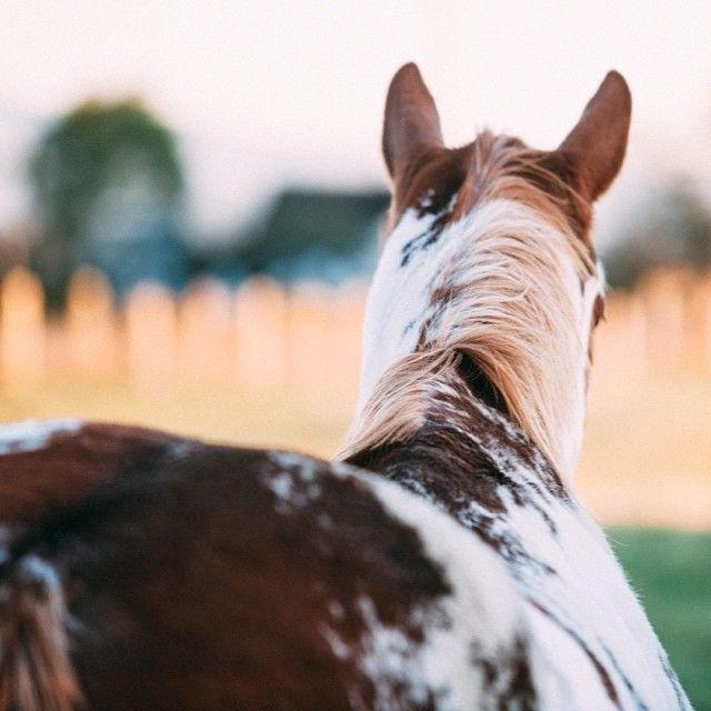 Pinterest Ercequestrian Horses Pretty Horses Beautiful Horses