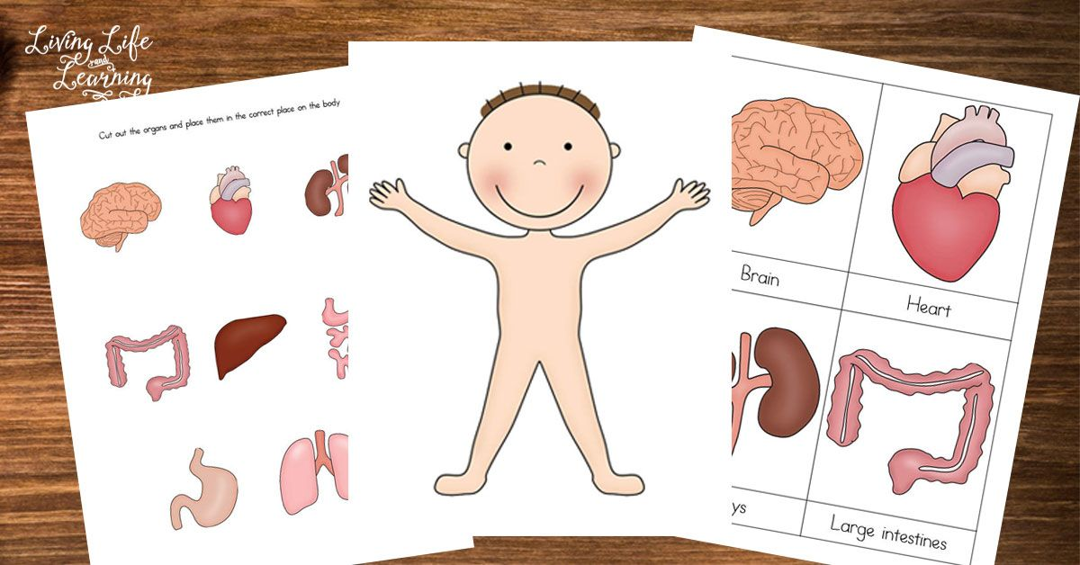 Preschool Human Body Printables Human body printables