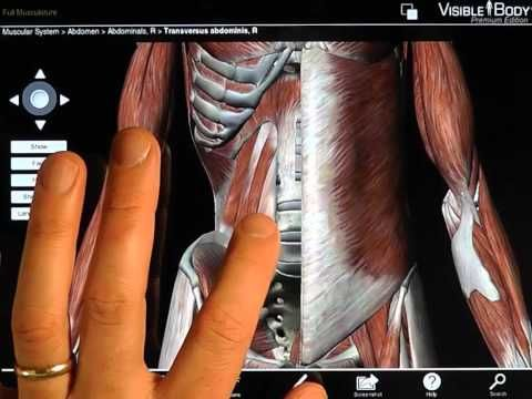 Best iPad Apps for Physical Therapy | Pinterest | Physical therapy ...