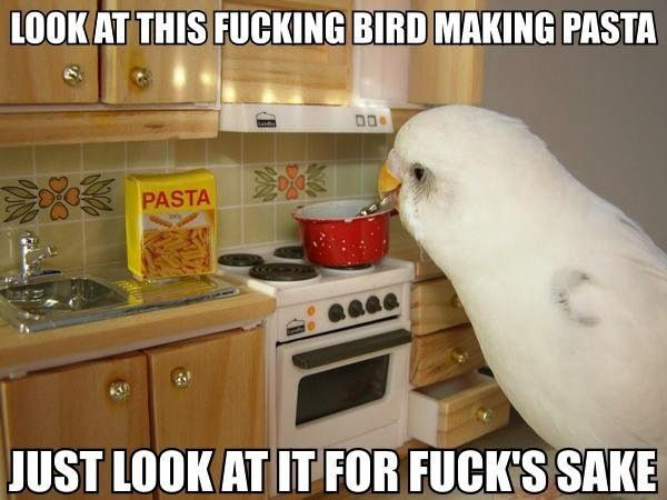 I don't know why this is funny, but it makes me laugh so hard.